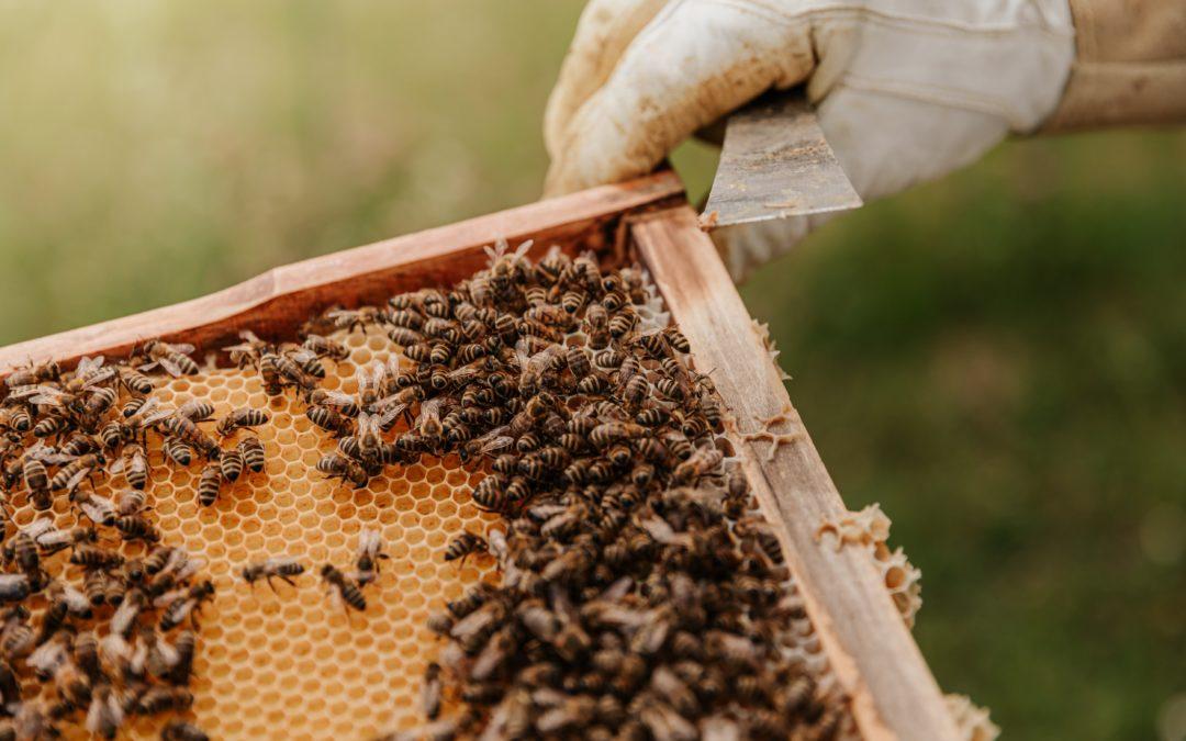 Parrainer une ruche pour préserver la biodiversité